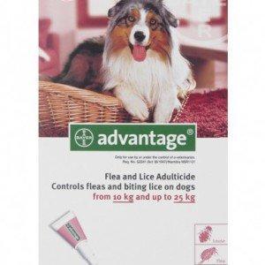 Advantage Large Dog 10 - 25kg