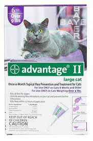 Advantage Large Cat