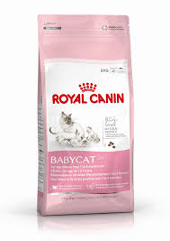 feline babycat