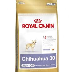 BHN Chihuahua Junior