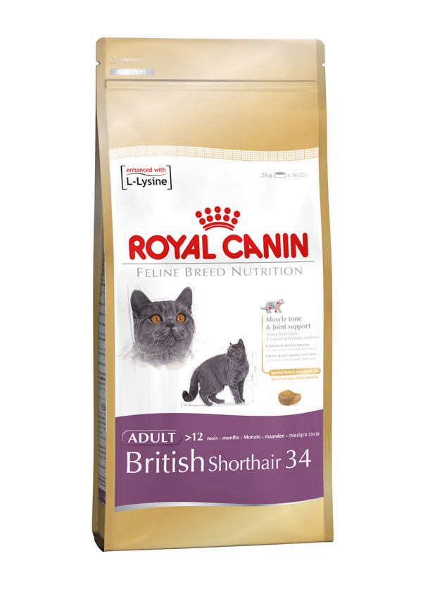 royal canin feline british shorthair 34 door to paw. Black Bedroom Furniture Sets. Home Design Ideas