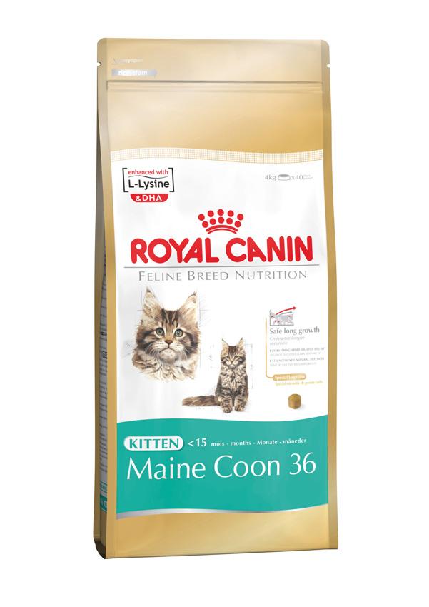 royal canin feline kitten maine coon 36 door to paw. Black Bedroom Furniture Sets. Home Design Ideas