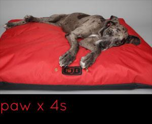 Paws x 4