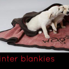 winter blankies