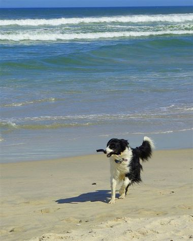 doggy_beach_3_quesemanas_2_380_474_80_s