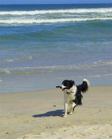 doggy_beach_3_quesemanas_2_380_474_80_s
