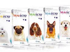 Bravecto oral Tick and Flea tablet