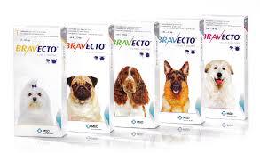 Bravecto oral Tick and Flea tablet