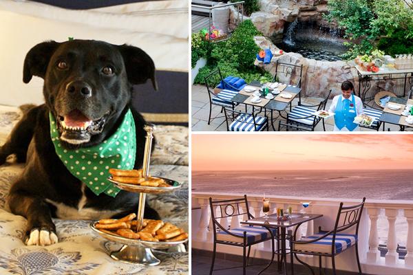 Pet Friendly Restaurants in Cape Town