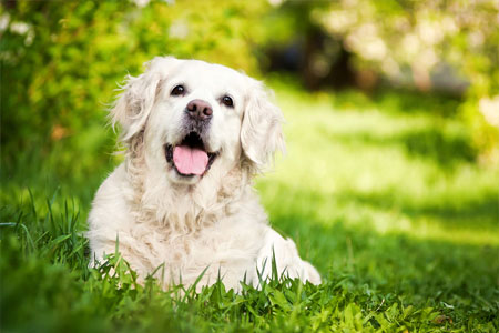 spring-allergies-and-your-pet